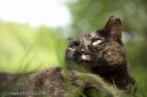 野良猫 サビ猫ちゃん