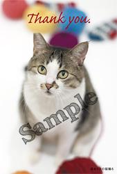 250_anne_sample