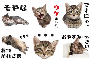 ほぼキジトラ猫の写真スタンプ